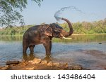 Elephant Bathing  Kerala  India