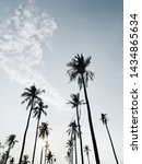 lonely tropical exotic coconut... | Shutterstock . vector #1434865634