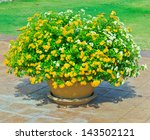 Yellow Flowers In Pots