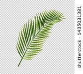palm leaf isolated transparent...   Shutterstock .eps vector #1435031381