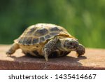 Stock photo the central asian tortoise also known as the brown asian tortoise walks along a red stone 1435414667