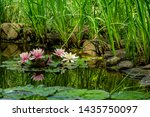 Water Lily Is Reflected In...
