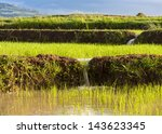 Rice Terraces Used For...
