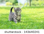 Stock photo cute little cat on the grass looking up 143640241