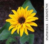 Macro Photo Nature Flower...