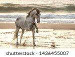 Gray Horse On The Sea.