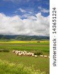 grazing sheep | Shutterstock . vector #143651224