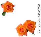 Three Orange Roses Isolated  O...
