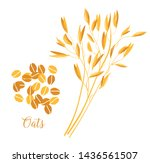 oats cereals grain. spikes and... | Shutterstock .eps vector #1436561507