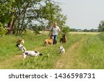 Stock photo dog sitter walks with many dogs on a leash dog walker with different dog breeds in the beautiful 1436598731