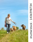 Stock photo dog sitter walks with many dogs on a leash dog walker with different dog breeds in the beautiful 1436598734