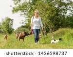Stock photo dog sitter walks with many dogs on a leash dog walker with different dog breeds in the beautiful 1436598737