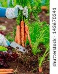 Gardening   First Crop Of...