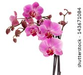 pink orchid isolated on white | Shutterstock . vector #143671084