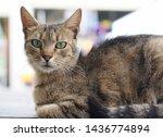 portrait of a grey striped cat... | Shutterstock . vector #1436774894
