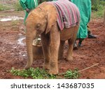 Постер, плакат: Baby elephant covered with