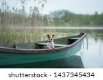Jack Russell Terrier In A Boat...