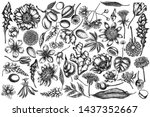 vector set of hand drawn black... | Shutterstock .eps vector #1437352667