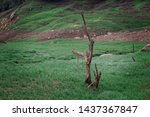 Dry Perennial Trees In The...