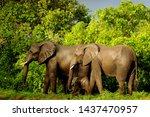 African elephant (Loxodonta africana) herd in Majete National Park, Malawi.