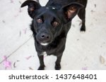 Small photo of black dog with pity eyes. cute rescued mutt