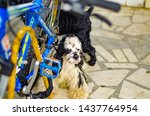 Stock photo the dog near the bike waiting for the owner 1437764954