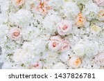 Stock photo flowers wall background with white and light orange roses 1437826781