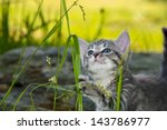 Stock photo cute little kitten playing in the garden 143786977