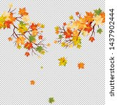 autumn maple tree with  falling ... | Shutterstock .eps vector #1437902444