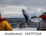 whale jump | Shutterstock . vector #143797264