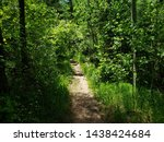 Small photo of Greenhorn hiking trail in the mountains of Colorado
