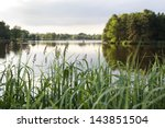 Reeds At The Lake Shore ...