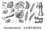 hop leaves barley wheat rye ear ... | Shutterstock .eps vector #1438538504