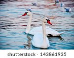two swans | Shutterstock . vector #143861935