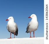 Two Seagulls Sitting On A Whit...