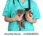 Stock photo veterinarian examining kittens isolated on white 143868001
