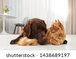 Stock photo cat and dog together on floor indoors fluffy friends 1438689197