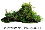 Jungle Tree Trunk With Tropical ...
