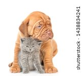 Stock photo puppy embracing cute kitten isolated on white background 1438834241