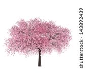 Japan Tree Sakura Isolated....
