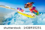 Stock photo jack russell dog surfing on a wave on ocean sea on summer vacation holidays with cool sunglasses 1438935251