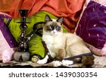 Cross Eyed Cat In A Turkish Ca...