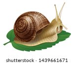 Snail. Vector Illustration Of...