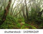jungle of nepal 8   Shutterstock . vector #143984269