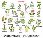 best laxative herbs. hand drawn ... | Shutterstock .eps vector #1439885354