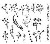 set of floral element  natural... | Shutterstock .eps vector #1439994014