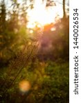 late afternoon sundown in the... | Shutterstock . vector #1440026534