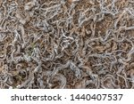 the intertwined roots of plants ... | Shutterstock . vector #1440407537
