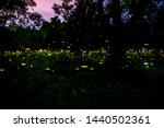 Stock photo firefly or fireflies flying in the forest at night time in prachinburi thailand 1440502361