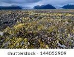 Arctic Landscape Near...